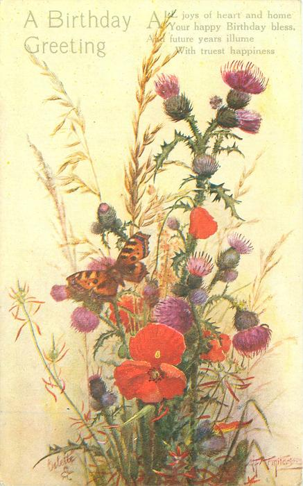 A BIRTHDAY GREETING butterfly on thistles, poppies, oats