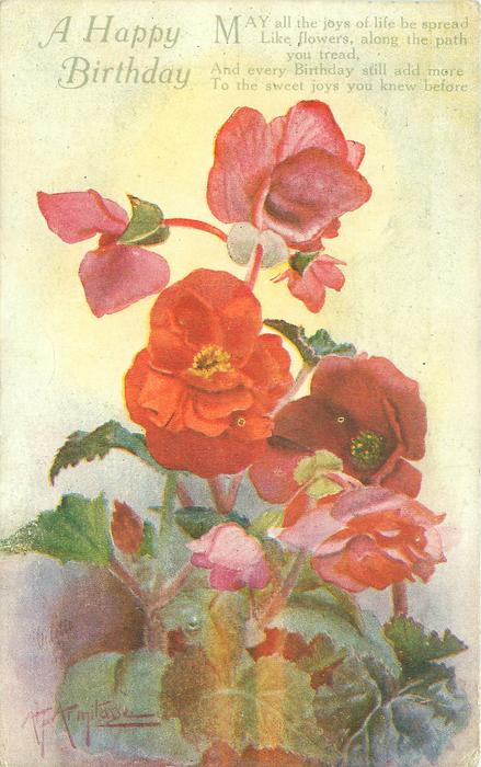 A HAPPY BIRTHDAY  red begonias