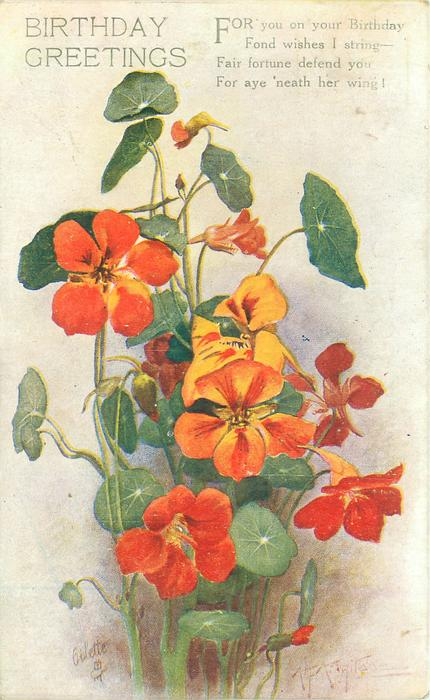 BIRTHDAY GREETINGS red/orange nasturtiums