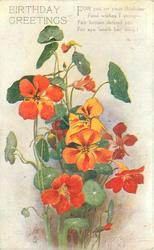 BIRTHDAY GREETINGS red/orange nasturtiums