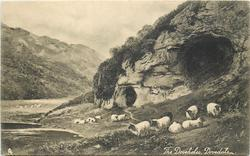 THE DOVEHOLES, DOVEDALE  sheep