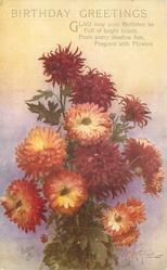 BIRTHDAY GREETING  bunch of deep red, bronze with crean centres chrysanthemums