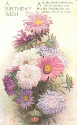 A BIRTHDAY WISH   many coloured chrysanthemums & single asters