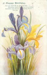 A HAPPY BIRTHDAY  one yellow & 2 purple iris
