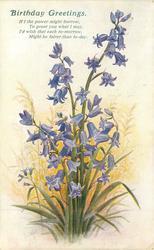 BIRTHDAY GREETINGS  bluebells