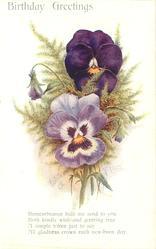 BIRTHDAY GREETINGS pansies & maidenhair ferns