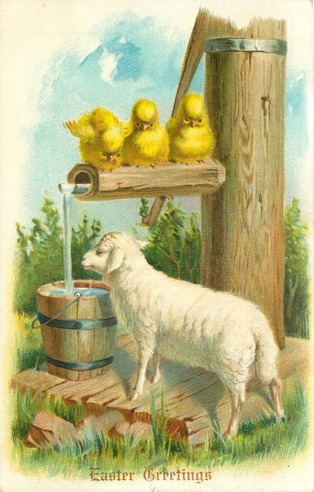 sheep stands facing left in front of water barrel, pump right with three chicks on spout