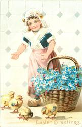 girl wears pink apron over brown skirt, forget-me-nots in basket on ground, 4 chicks