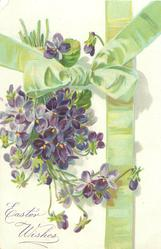 EASTER WISHES bunch of violets, stalks pointing up & slightly left, green ribbon & bow