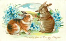 two brown/white rabbits, forget-me-nots, field behind