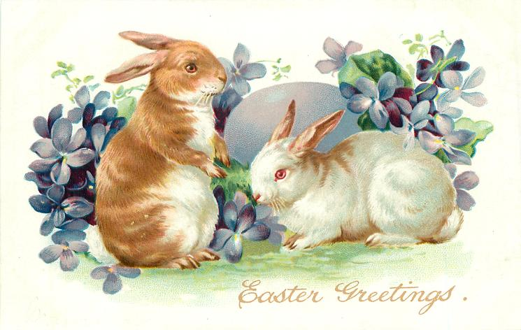 white rabbit right, brown rabbit left sits up, violets in front of purple egg