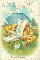 four chicks peck at damaged book in meadow, blue parasol behind