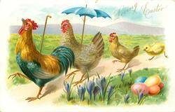 cockerel carrying stick leads hen carrying parasol followed by smaller hen & chick, all move left, crocus & easter eggs front right