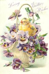 LOVING EASTER WISHES one chick among purple pansies with yellow centres in white basket