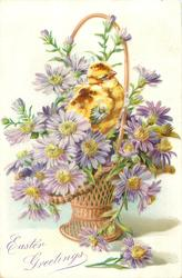 EASTER GREETINGS one chick among pale purple asters with yellow centres in wicker basket