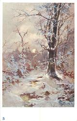 snow scene, very distant man & dog distant on path to left of large tree, central sun