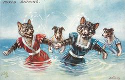 two cats holding paws in sea with two dogs splashing water on them from behind