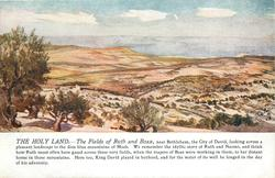 THE FIELDS OF RUTH AND BOAZ
