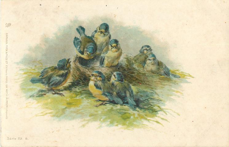 8 blue-tits around nest