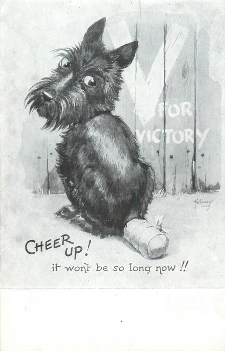 CHEER UP! IT WON'T BE SO LONG NOW!!  scottie with damaged tail, V FOR VICTORY on fence behind