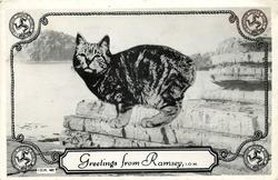 GREETINGS FROM RAMSEY, I.O.M. manx cat