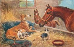 brown horse and foal, greyhound & three puppies
