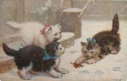 three kittens in snow, one plays with leaf