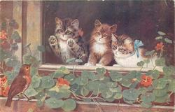 three kittens look out of window at robin