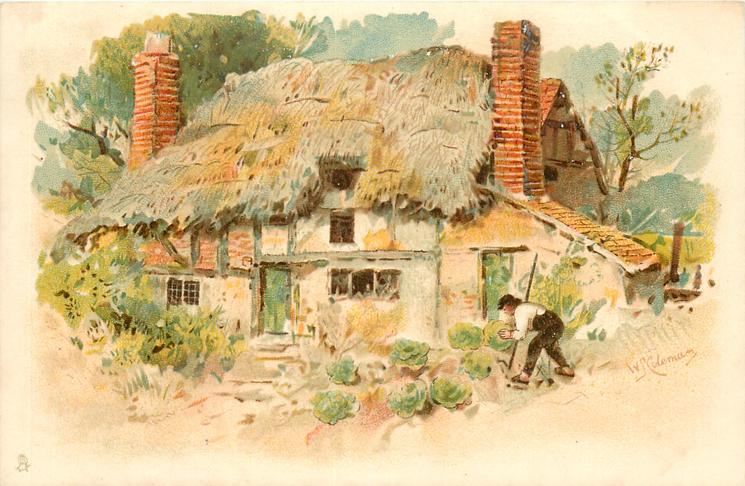 man tends cabbages in front of cottage