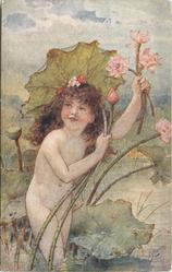 A WATER LILY  nude child picks water lilies