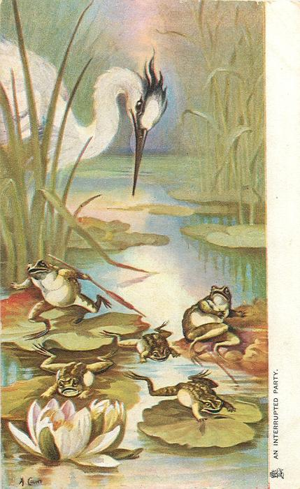 AN INTERRUPTED PARTY  five frogs scatter threatened by heron