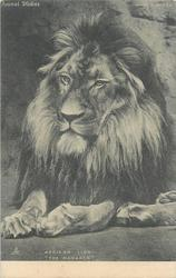 "AFRICAN LION, ""THE MONARCH"""