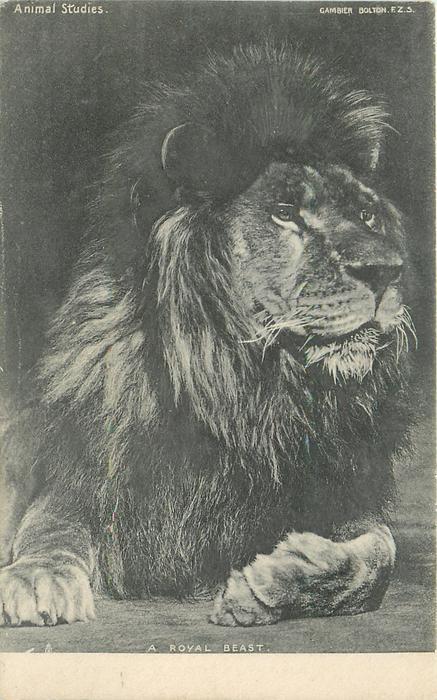 A ROYAL BEAST
