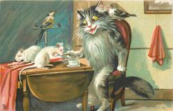 cat sits at table,  two white rats on table, bird on back of chair & another on a perch