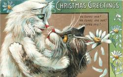 CHRISTMAS GREETINGS  two cats embrace, white cat to left, daisies abound, green border & greeting upper right