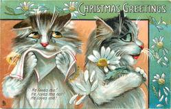 CHRISTMAS GREETINGS  two cats, one cries into hanky, other turns back, daisies abound