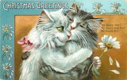 CHRISTMAS GREETINGS  two cats embrace, white cat to left, daisies abound, blue border & greeting upper left