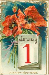 A HAPPY NEW YEAR  calender lower right, two large red poppies and one bud above, stems to left