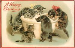 A HAPPY CHRISTMAS  five kittens licking milk from big bowl