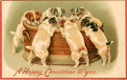 A HAPPY CHRISTMAS TO YOU  six puppies drinking from bowl
