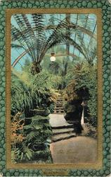 THE FERNERY, WINTER GARDENS