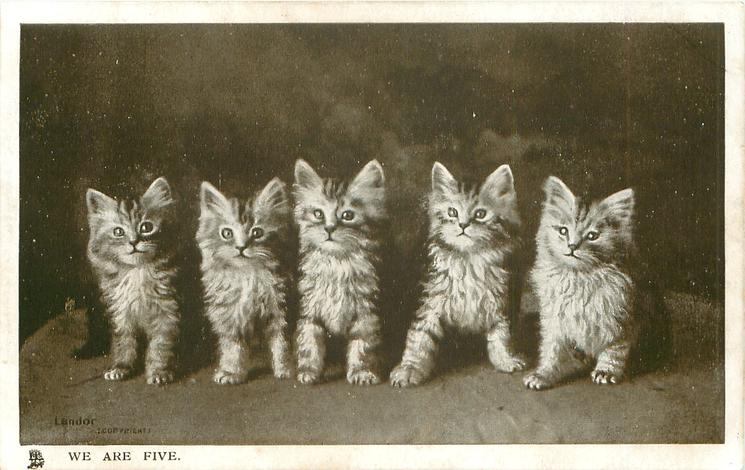 WE ARE FIVE, Persian kittens