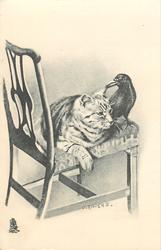 cat sitting on chair with a crow