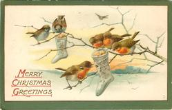 MERRY CHRISTMAS GREETINGS  four robins & two sparrows on branch, two socks hang from it