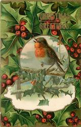 CHRISTMAS GREETINGS  inset robin on limb, holly all round
