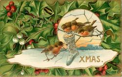 SINCERE GOOD WISHES   XMAS  round inset with three robins on branch, another below, holly around