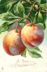 A HAPPY CHRISTMAS TO YOU  three peaches hanging from branch