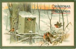 CHRISTMAS GREETINGS  snow scene  five robins, one sits on slot of mail box, one flies, three sit