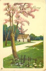 rural view, road behind tree with pink flowers leading up to barn