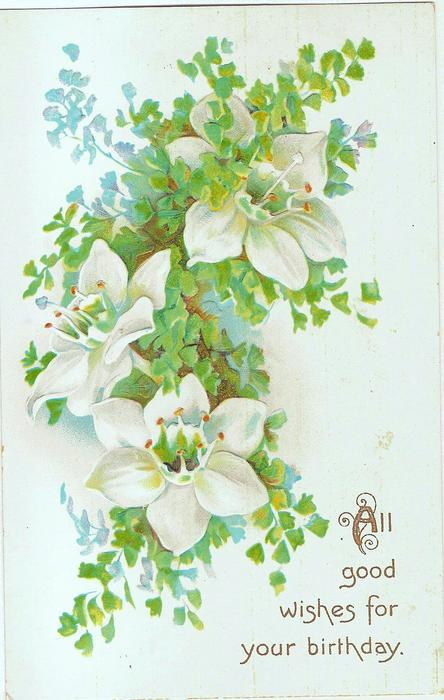 ALL GOOD WISHES FOR YOUR BIRTHDAY white hellebores